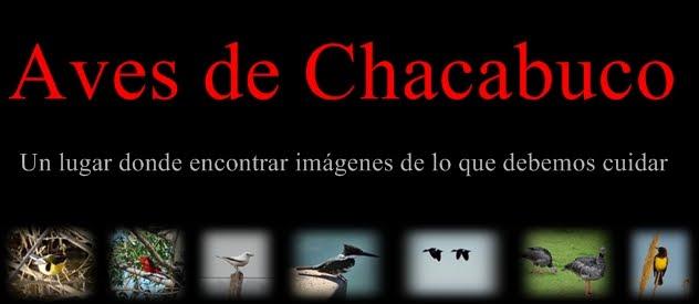 aves de Chacabuco