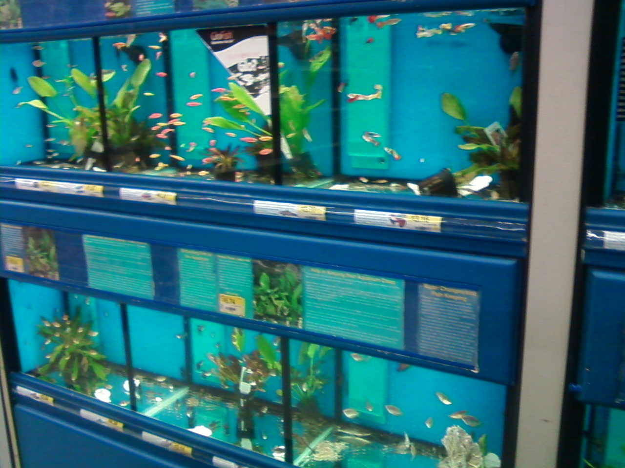 pet fish at walmart top 188 complaints and reviews about