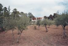 Casa do Sino - Olival