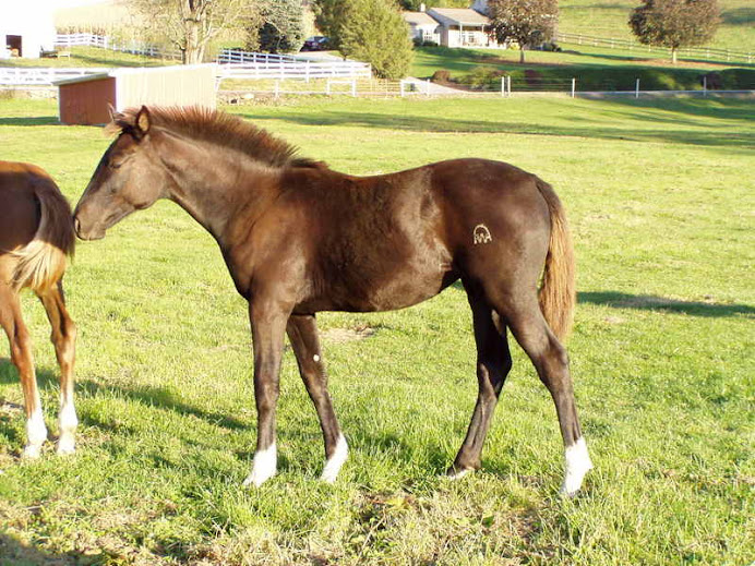 Wynona, 2008 Waldaire filly, after inspection