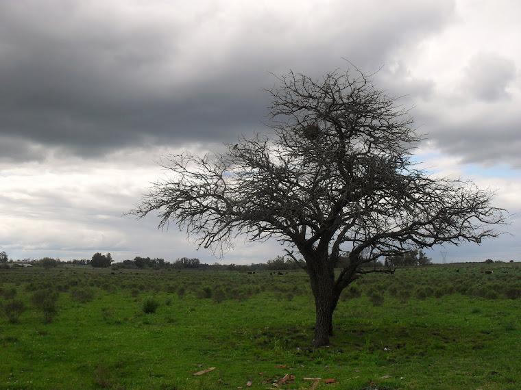 Paisajes Rurales.