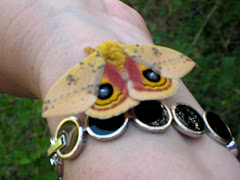 Io Moth We Raised