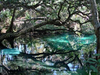fern hammock spring exploring the nature of florida  juniper springs  rh   naturalflorida blogspot