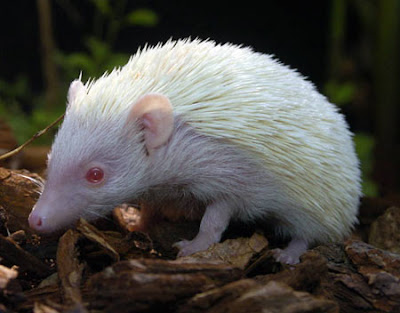 Albino Animals picture,Albino Animals
