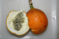 Granadilla