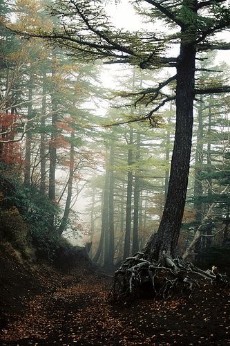 aokigahara forest japan. Aokigahara Forest, Japan - Why