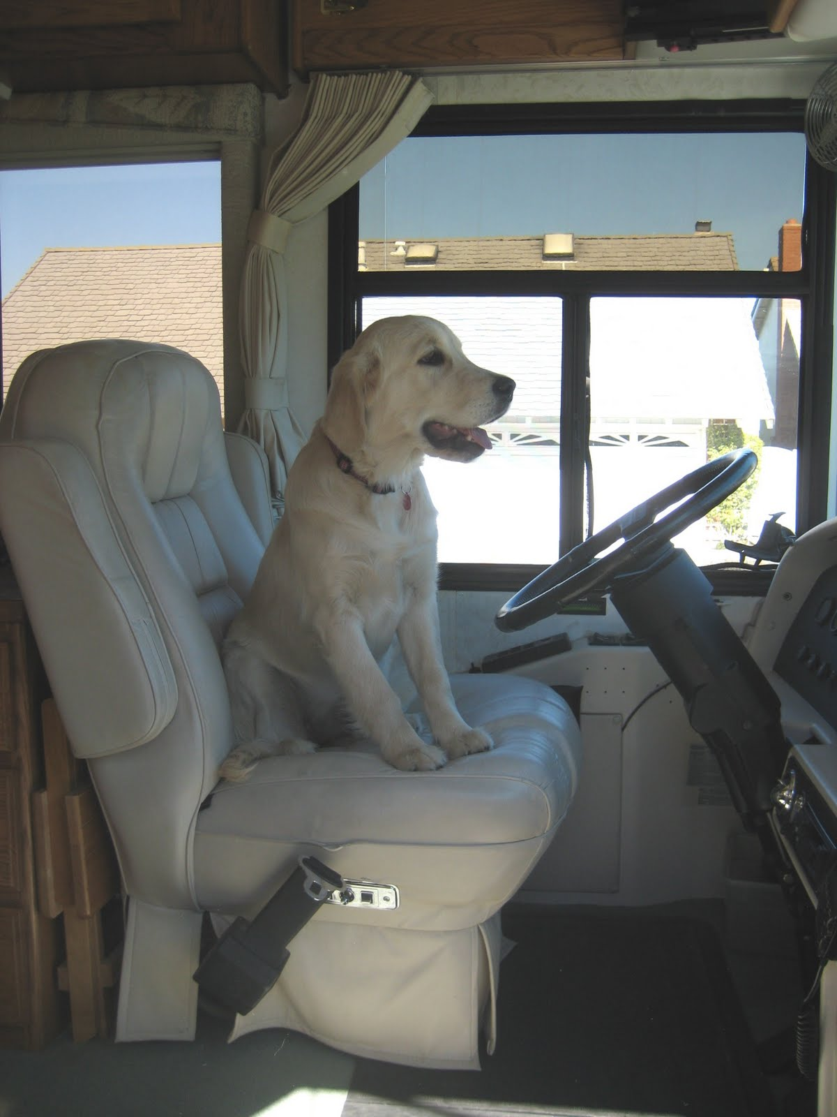 Joe and vicki 39 s blog best dogs for rving for Best dogs for you