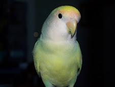 """<a href=""""http://www.birdchannel.com/blog/viewbio.aspx?apid=13083"""">BeBe - July 15, 2005</a>"""