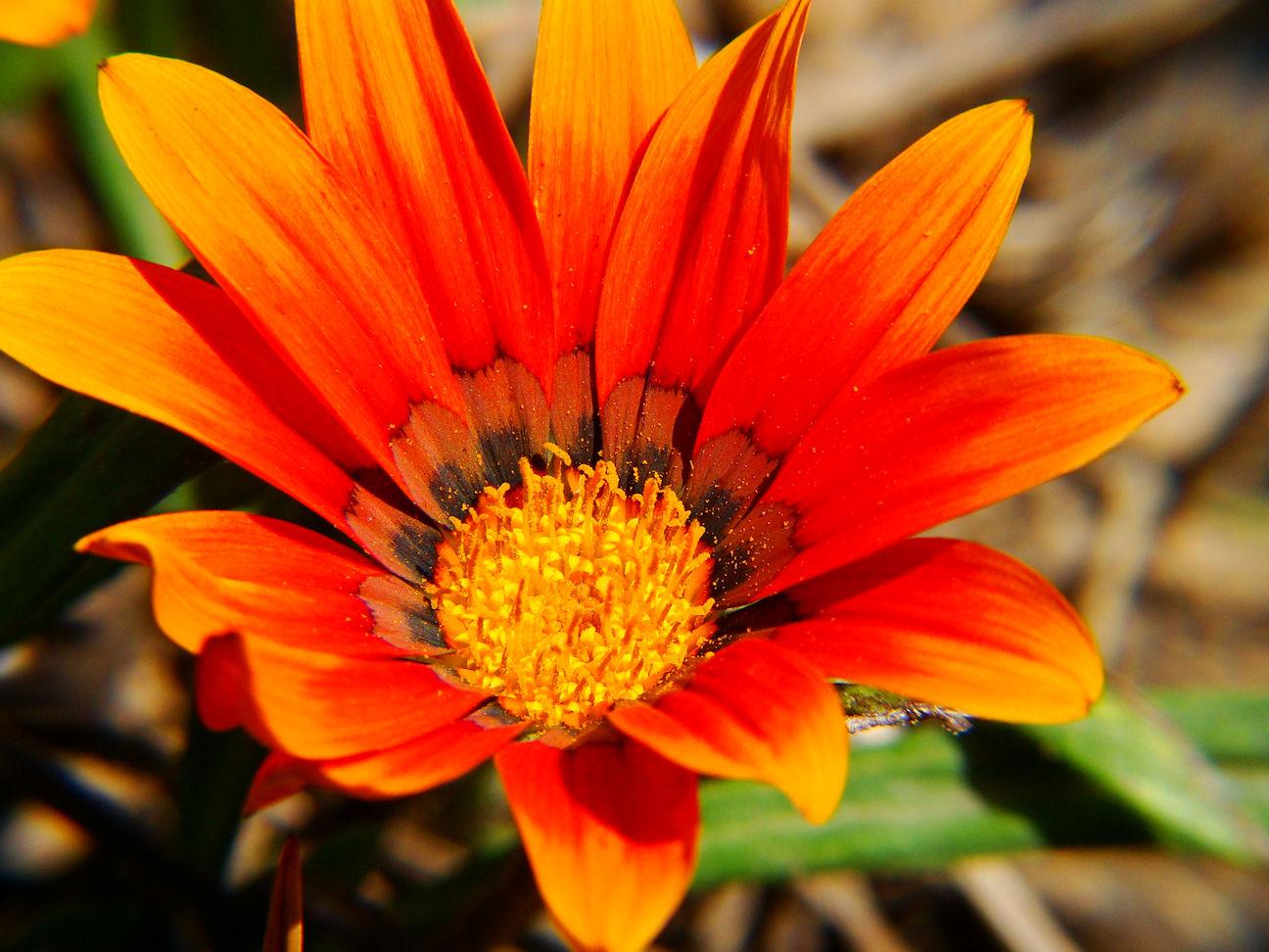 Digital art by john late summer blooming flowers - Fall blooming flowers ...
