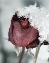 Mysigt med vinter!