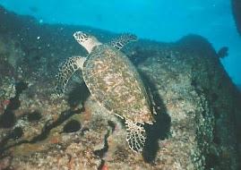 O Coral é bonito, e a Tartaruga Também!