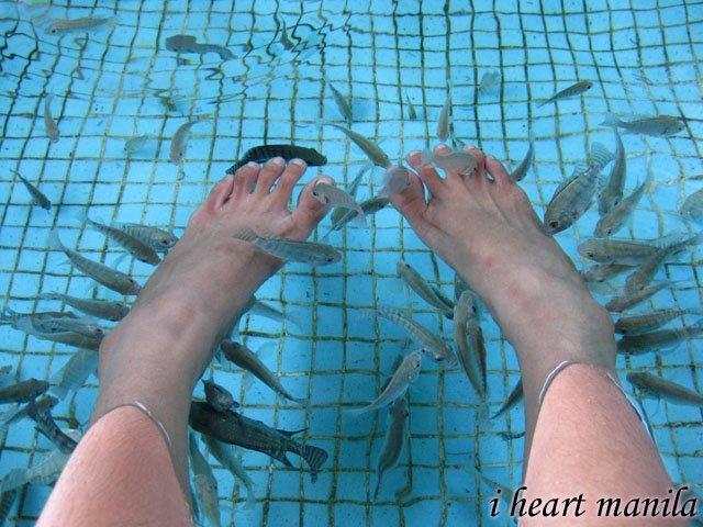 manila ocean park fish spa