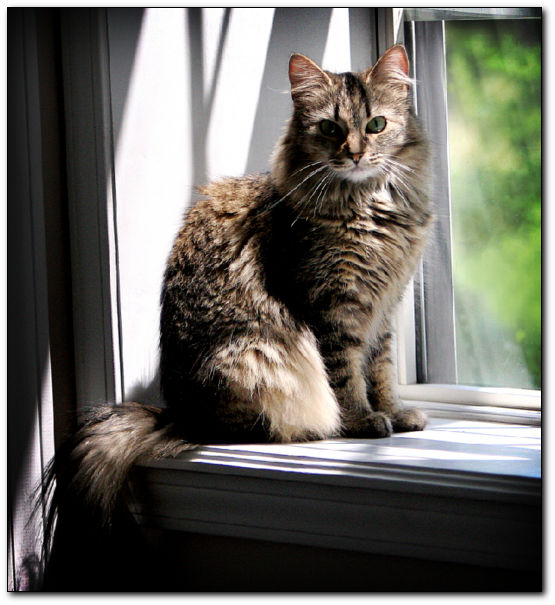 The Top Ten things you can do to make your indoor cats happy