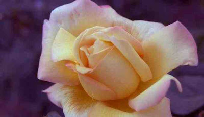 Tu Ser Es Un Canto A La Eterna Belleza En Ti Hay Algo Que Deja Perplejo Eres Modelo De Genial Realeza Cuyo Semblante Vivo Reflejo