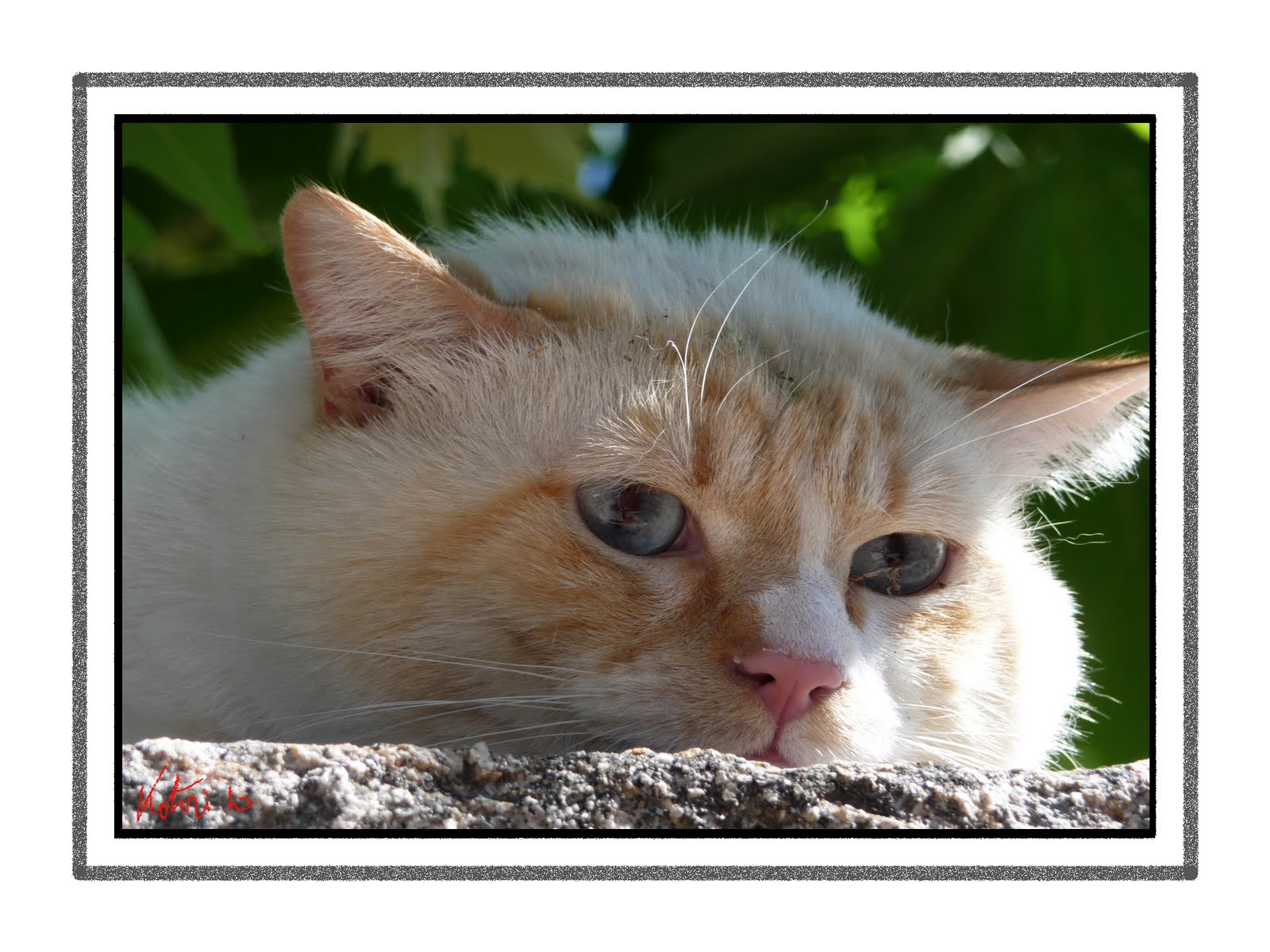 Foto kotori gato asustado for Ahuyentar gatos de mi jardin