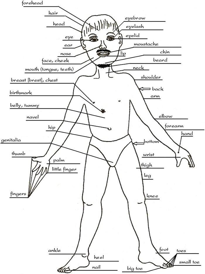 Parts Of The Human Body Deivam Pmr