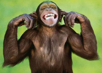 Microsoft Aren't Listening! - Image of a grinning Chimpanzee with it's fingers in it's ears.