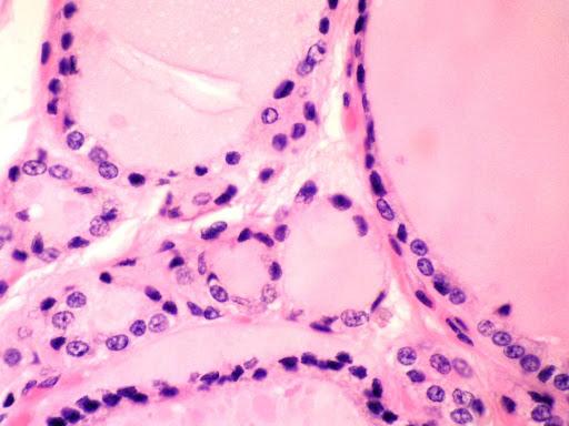 Histologia del Aparato Endocrino