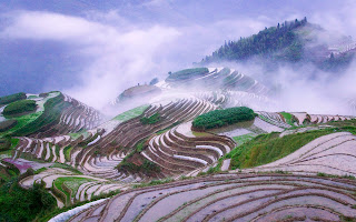 Rice Terraces Morning Mist Nature Wallpaper