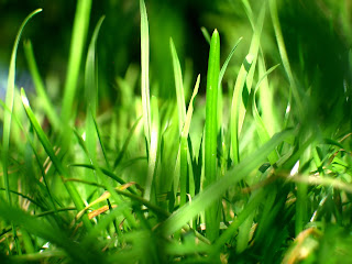Grass HD Nature Wallpaper