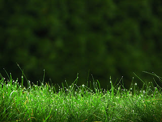 Grass in the Morning Nature HD Wallpaper