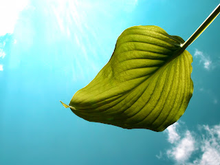 Green Leaf Sky Background Nature HD Wallpaper