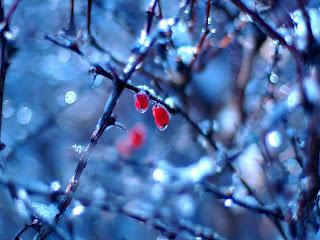 Freezing Tree Nature HD Wallpaper