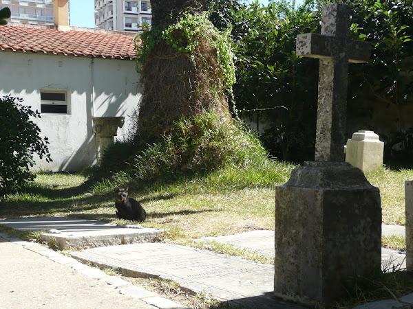 Capella dos Ossos. Faro, Portugal (fotos de Patri y Alex)