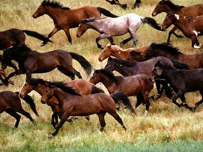 Horse Standard Resolution wallpaper 14