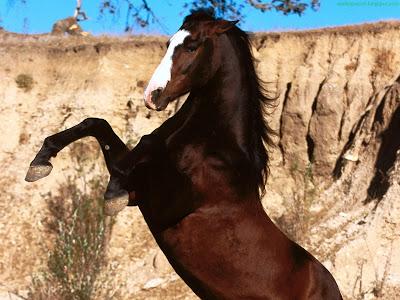 Horse Standard Resolution wallpaper 12