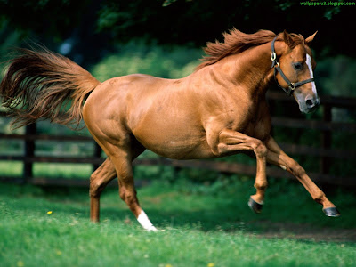 Horse Standard Resolution Wallpaper 41