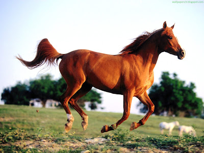 Horse Standard Resolution Wallpaper 39