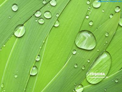 Toshiba Standard Resolution Wallpaper 4