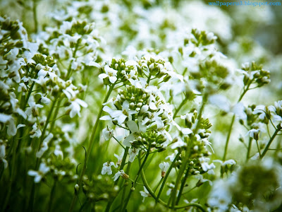 Flower Standard Resolution Wallpaper 123