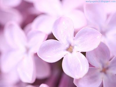 Flower Standard Resolution Wallpaper 127