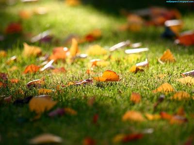 Autumn Season Standard Resolution Wallpaper 5