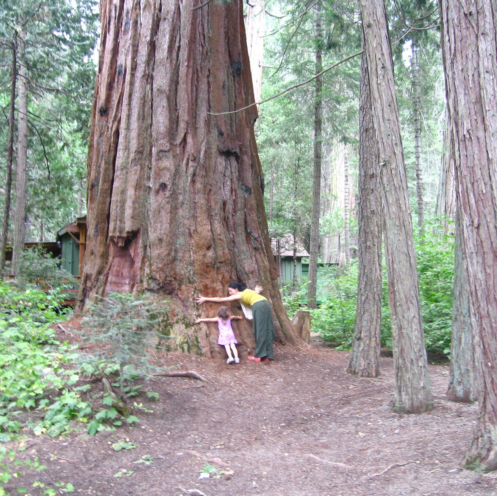 [sequoia+national+1.jpg]