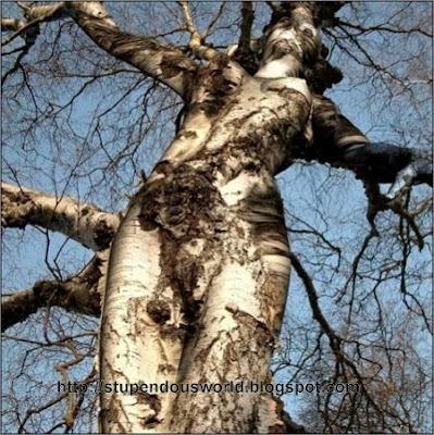 Amazing Unbelievable Tree