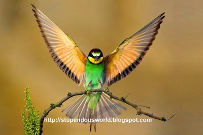 Amazing Photos of Birds