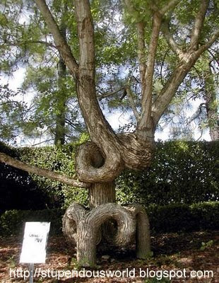 Unusual Beautiful Amazing Tree