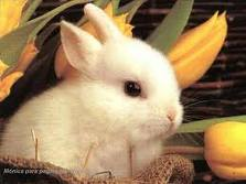 Caja conejo para tu Primera dientes Leche