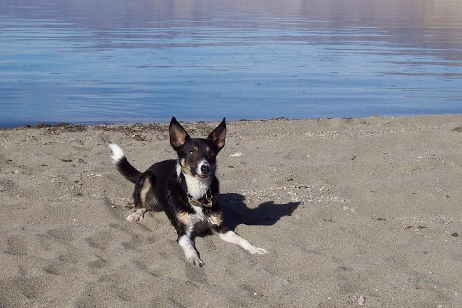DIG THAT Terrier Intensity!