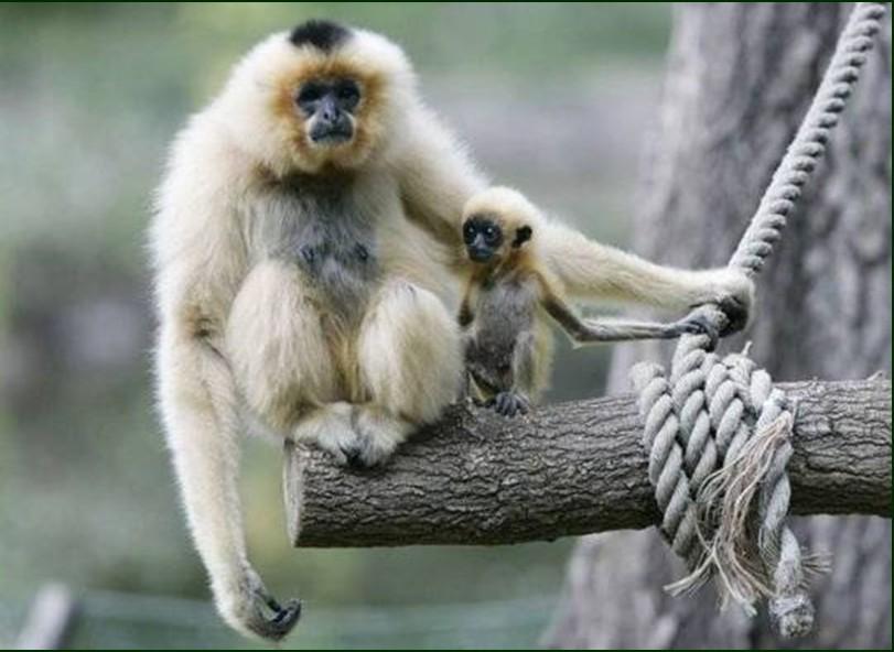 MonkeyMamaWhyDontIHaveFur.jpg
