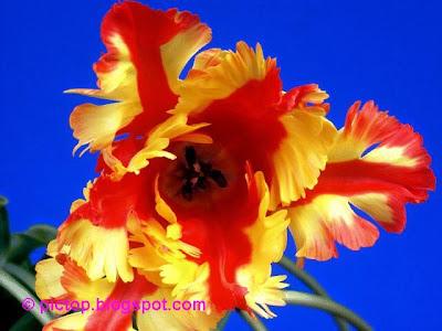 زیباترین+گل+دنیا