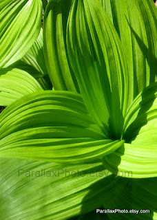 nature photograph of vibrant green leaves