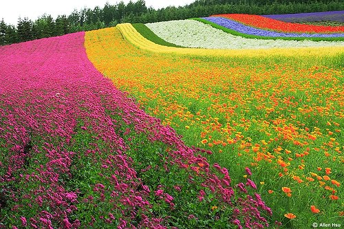 Colorful Dekstop