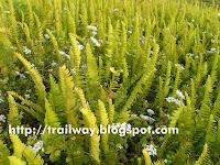 Plants in Pu La Deshpande park