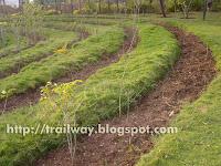 Farming tracks in Pu La Deshpande park