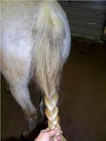 Step 2: Braiding a Horse's Tail