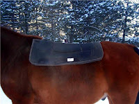 Diamond Wool Saddle Pad on Sway-Backed Horse